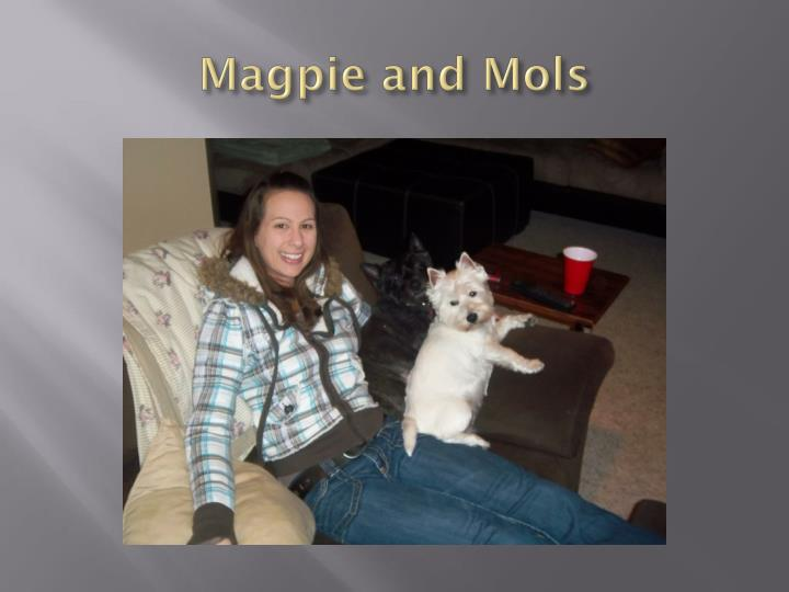 Magpie and mols