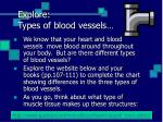 explore types of blood vessels