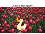 quack quack quack1