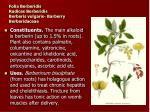 folia berberidis radices berberidis berberis vulgaris barberry berberidaceae