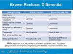 brown recluse differential