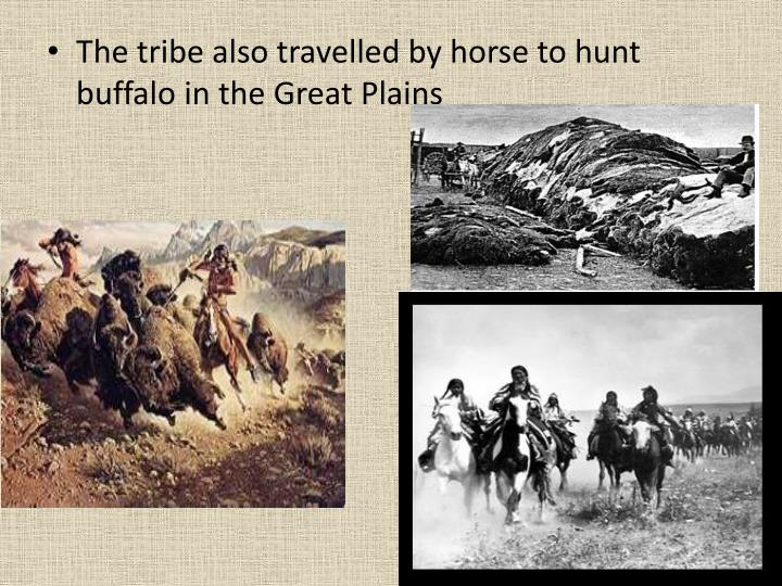 The tribe also travelled by horse to hunt buffalo in the Great Plains