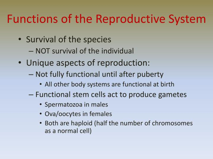 Functions of the reproductive system