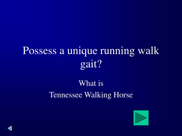 Possess a unique running walk gait?