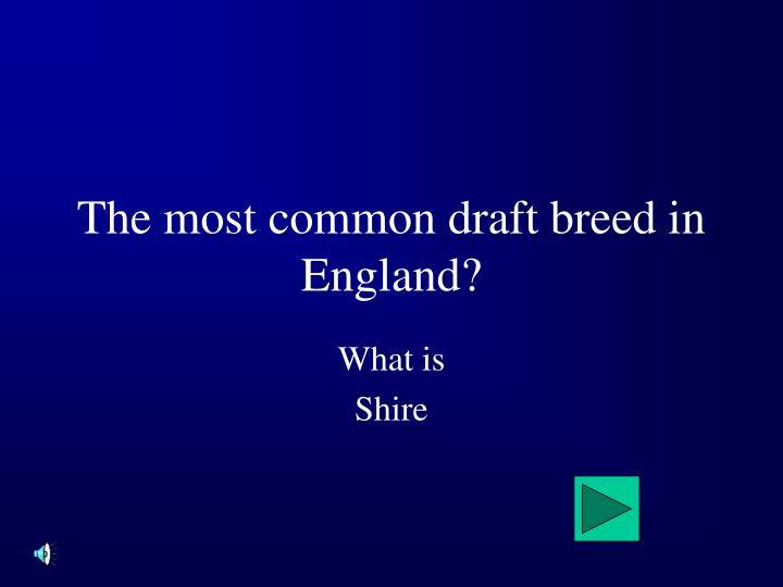 The most common draft breed in England?