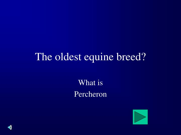 The oldest equine breed?