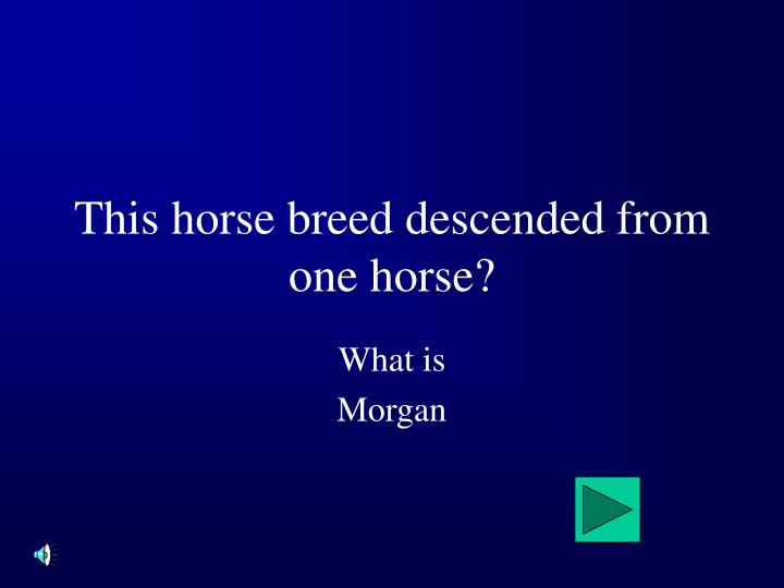 This horse breed descended from one horse?