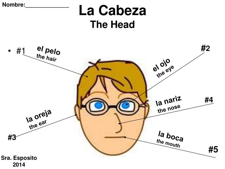 la cabeza the head n.