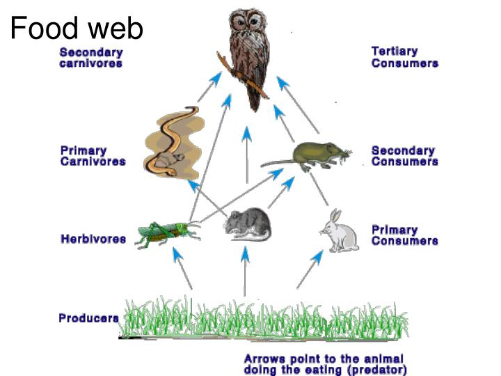 Create A Food Web With The Following Organisms