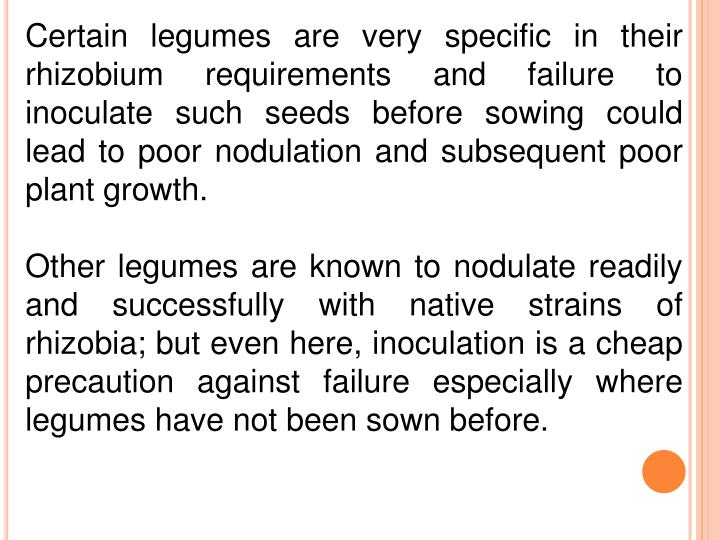 Certain legumes are very specific in their rhizobium requirements and failure to inoculate such seeds before sowing could lead to poor nodulation and subsequent poor plant growth.