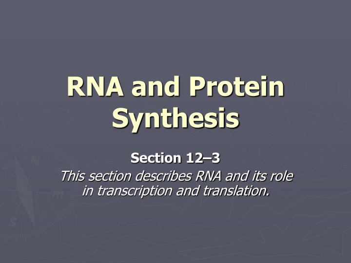 rna and protein synthesis n.