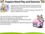 puppies need play and exercise