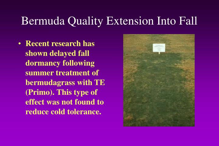 Bermuda Quality Extension Into Fall