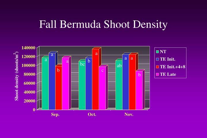Fall Bermuda Shoot Density