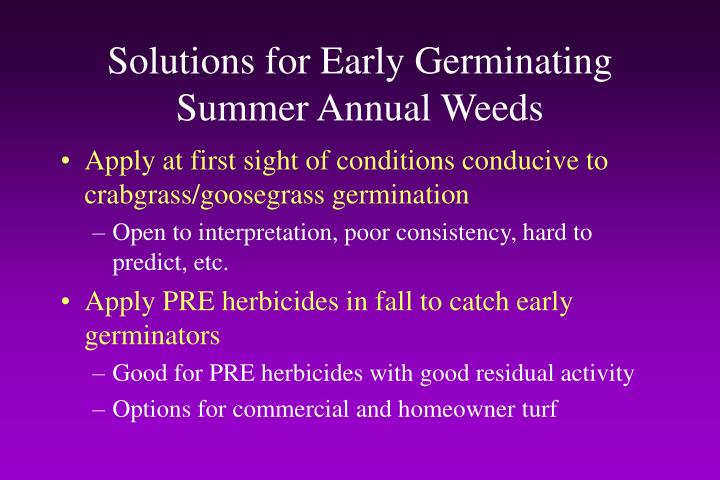 Solutions for Early Germinating Summer Annual Weeds