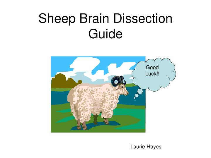 sheep brain dissection guide n.