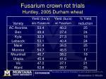 fusarium crown rot trials huntley 2005 durham wheat
