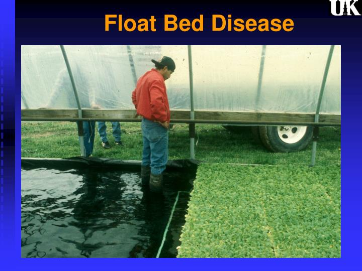 float bed disease n.