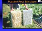 possible root stimulation