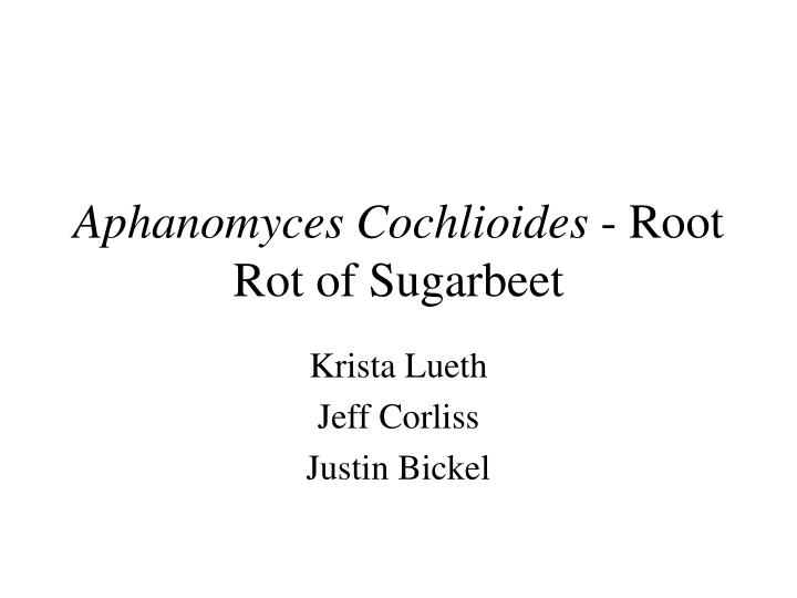 aphanomyces cochlioides root rot of sugarbeet n.