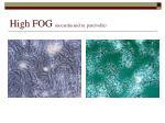 high fog nocardia and m parcivella