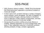 sds page