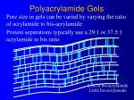 polyacrylamide gels5