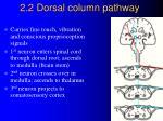 2 2 dorsal column pathway
