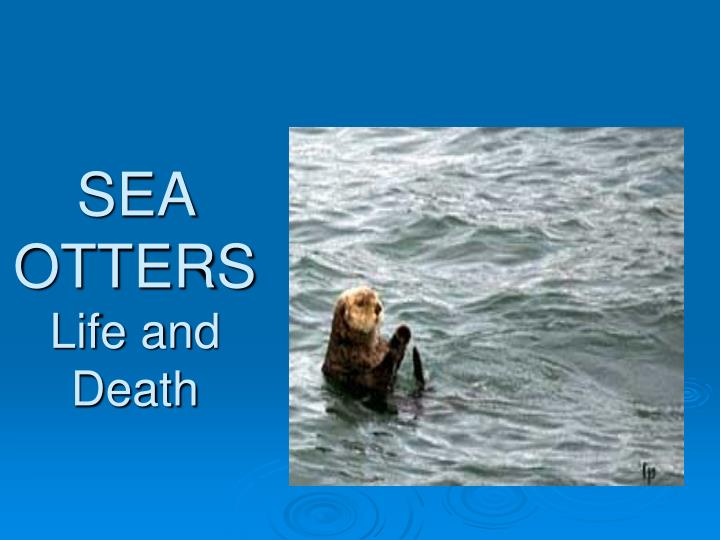 sea otters life and death n.