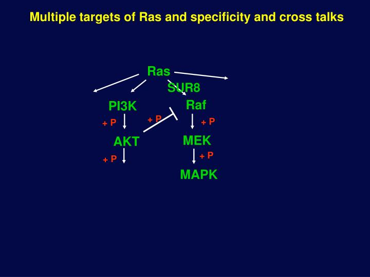 Multiple targets of Ras and specificity and cross talks
