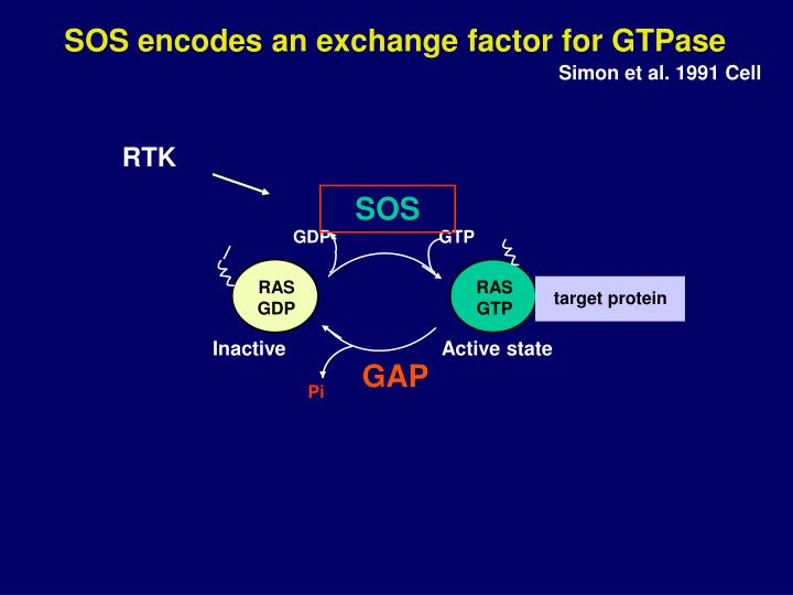SOS encodes an exchange factor for GTPase