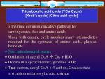 tricarboxylic acid cycle tca cycle kreb s cycle citric acid cycle