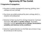 agronomy of tea contd