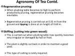 agronomy of tea contd11