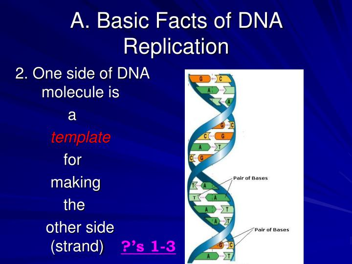 A. Basic Facts of DNA Replication
