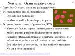 neisseria gram negative cocci