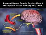 trigeminal nucleus caudalis receives afferent messages and acts as a sensory relay center
