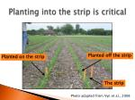 planting into the strip is critical