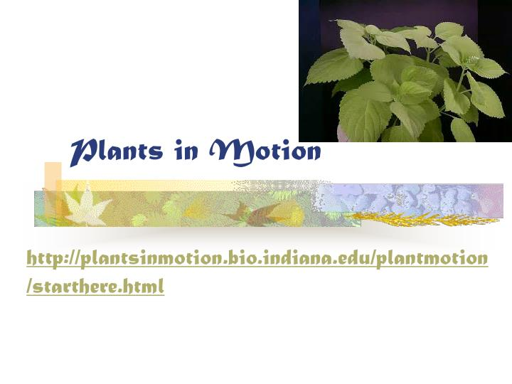 plants in motion n.
