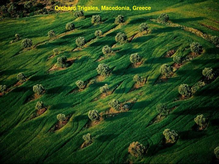 Orchard Trigales, Macedonia, Greece