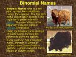 binomial names