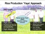 rice production yaya approach