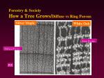 forestry society how a tree grows diffuse vs ring porous