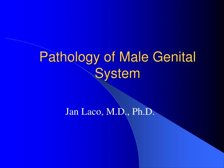 pathology of male genital system n.