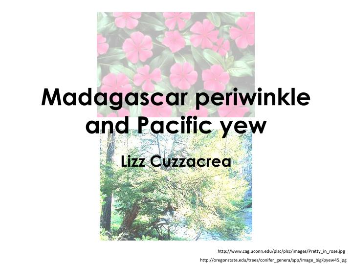 madagascar periwinkle and pacific yew n.