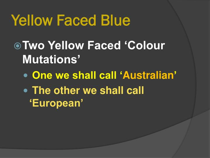 yellow faced blue n.