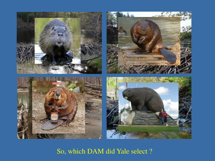 So, which DAM did Yale select ?
