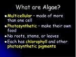 what are algae