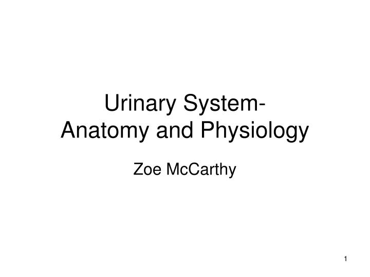 PPT - Urinary System- Anatomy and Physiology PowerPoint Presentation ...