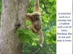 a mammal such as a monkey has a habitat with a lot of trees monkeys like to live and play in trees